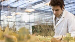 GM-crops-760x428